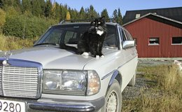 norway cat and wagon